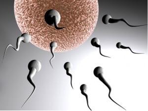 2 sperma